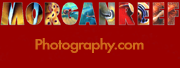 Jane Morgan website logo